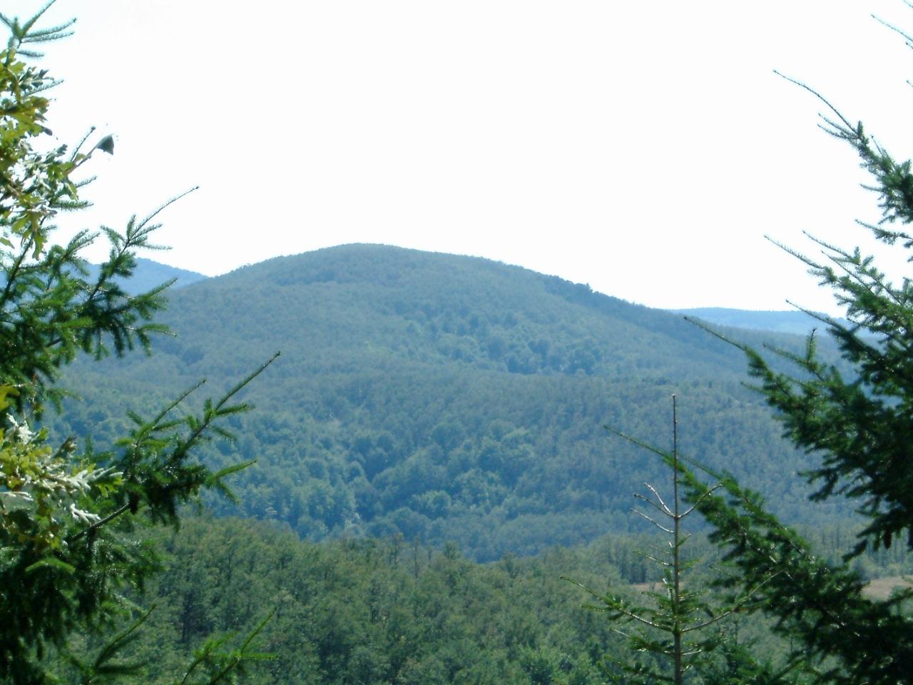 Mount Holomontas