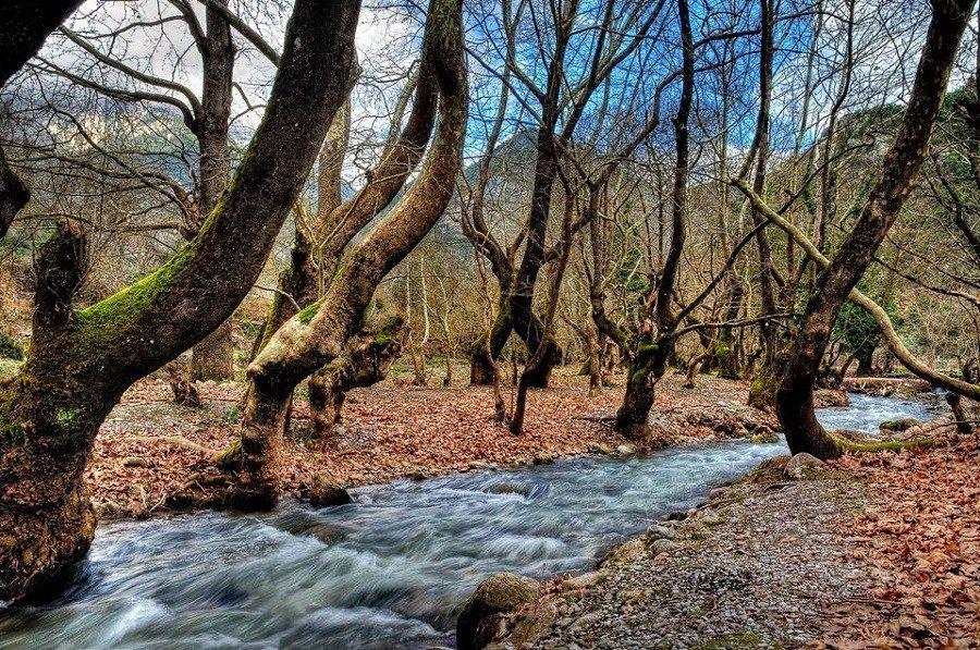Zarouchla Forest