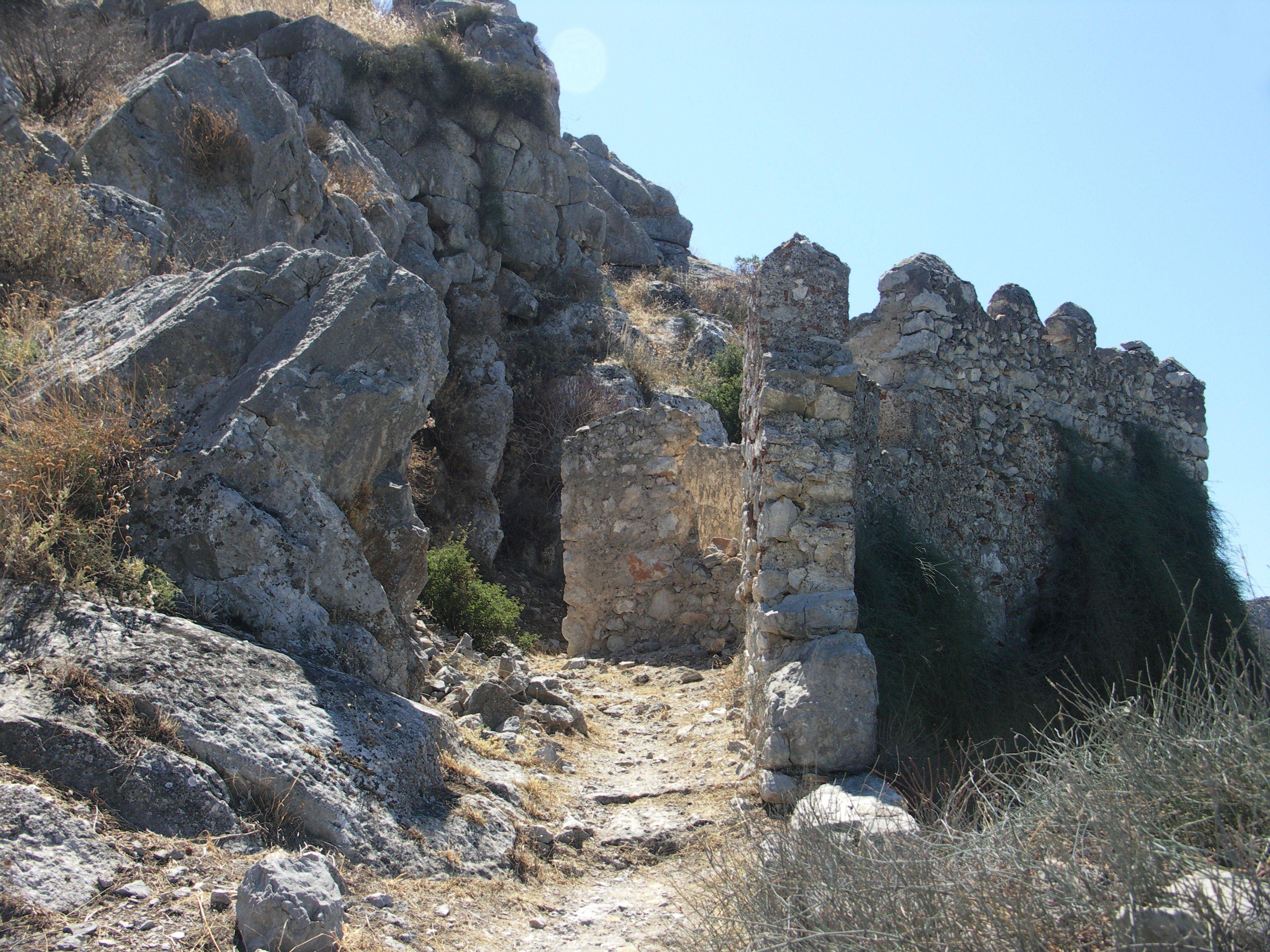 Ancient Asini